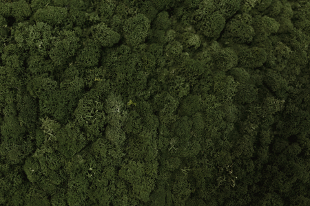 Aerial view of green moss Stock Photo