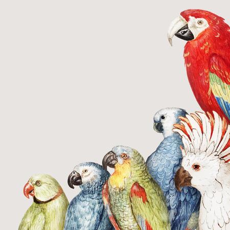 Vintage parrot variety border frame vector