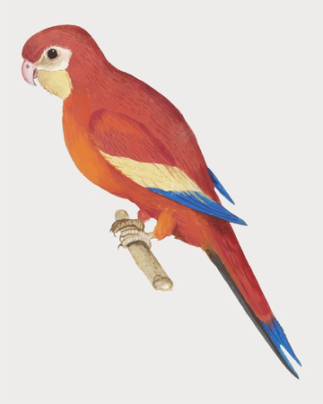 Vintage red parrot illustration vector