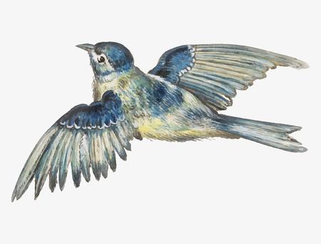 Vintage blue tit bird illustration vector