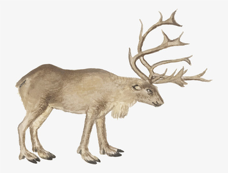 Vintage reindeer illustration in vector