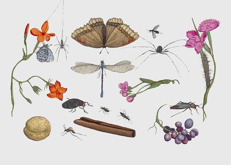 Vintage natural history ensemble illustration vector