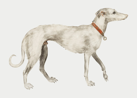 Vintage greyhound illustration in vector Illustration
