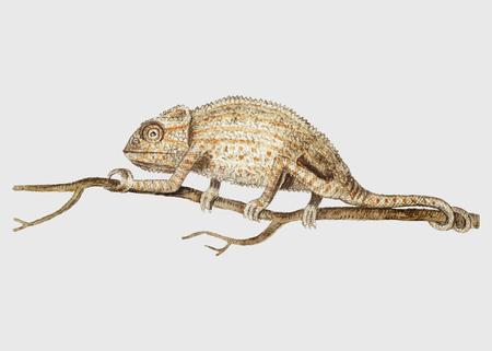 Vintage chameleon on the tree branch illustration vector Illustration