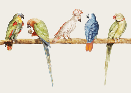Vintage parrot variety perched on the branch illustration vector