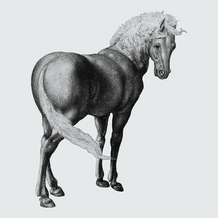 Vintage horse illustration in vector