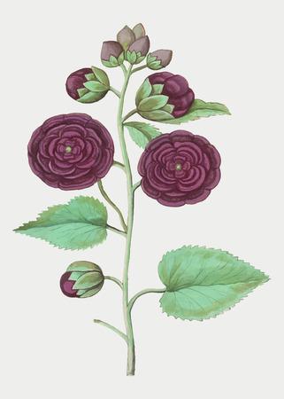Vintage hollyhock flower illustration in vector Stockfoto - 125376488