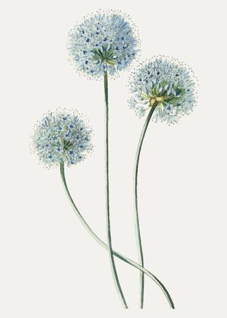 Vintage blue leek flower branch for decoration Illustration