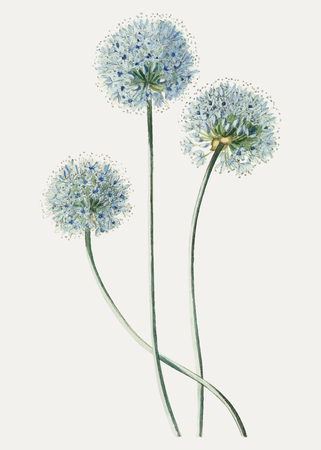 Vintage blue leek flower branch for decoration 向量圖像