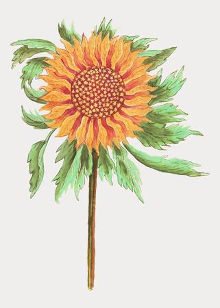 Vintage Persian lily flower illustration in vector 일러스트