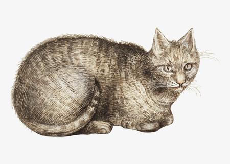 Ilustración de gato doméstico vintage en vector Ilustración de vector