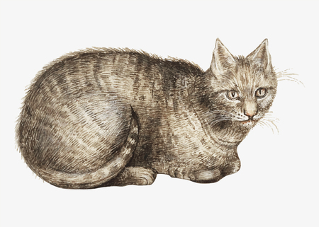Vintage domestic cat illustration in vector