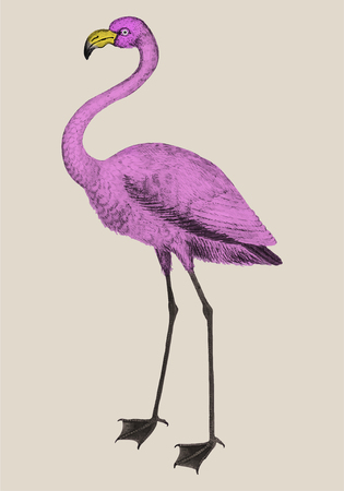 Vintage full length pink flamingo illustration vector