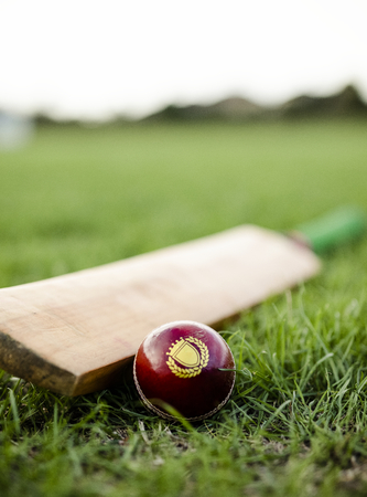 Cricket bat and ball on green grass