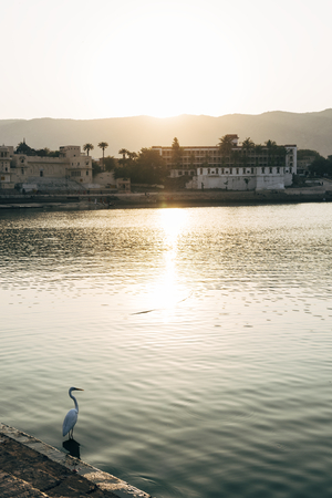 Egret bird at Pushkar lake in Rajasthan, India