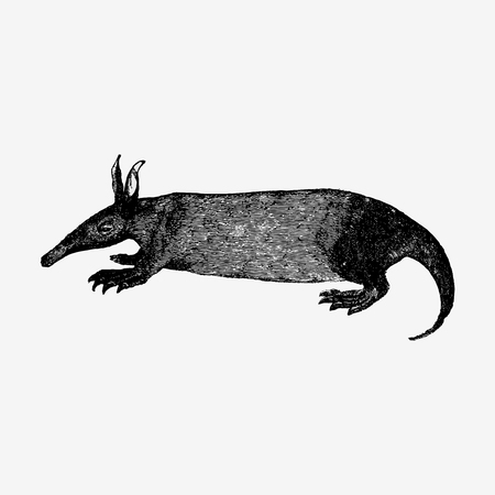 Drawing of anteater