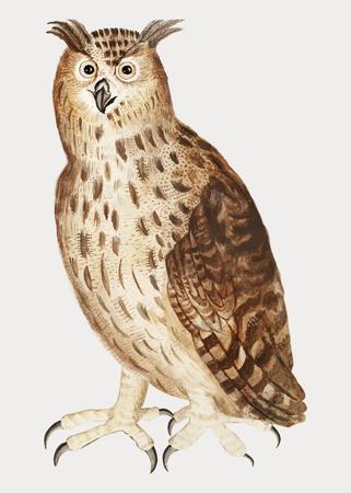 Vintage eagle owl illustration in vector Illustration