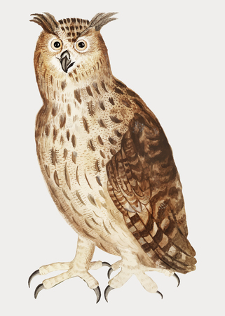 Vintage eagle owl illustration in vector Иллюстрация