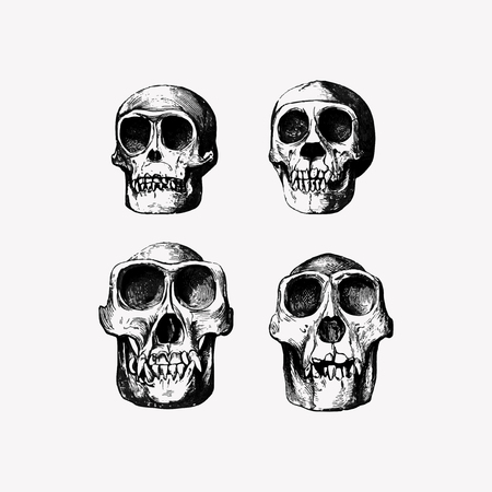 Vintage skull head engraving vector