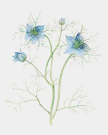 Vintage blue nigella flower illustration in vector