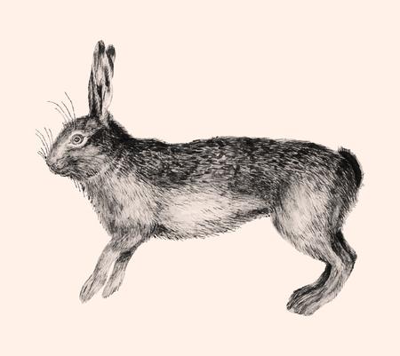 Illustration de lièvre vintage en vecteur