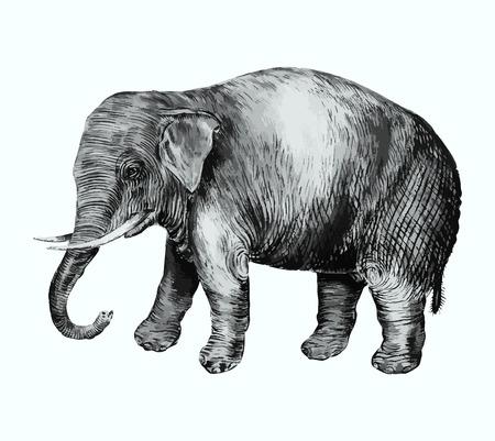 Vintage Asian elephant illustration in vector Ilustração Vetorial