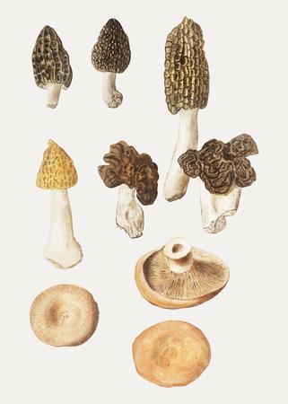 Vintage mushroom variety illustration vector 일러스트