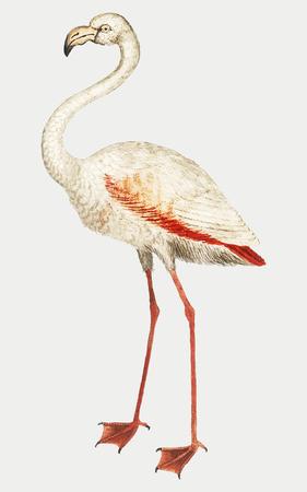 Vintage full length flamingo illustration vector