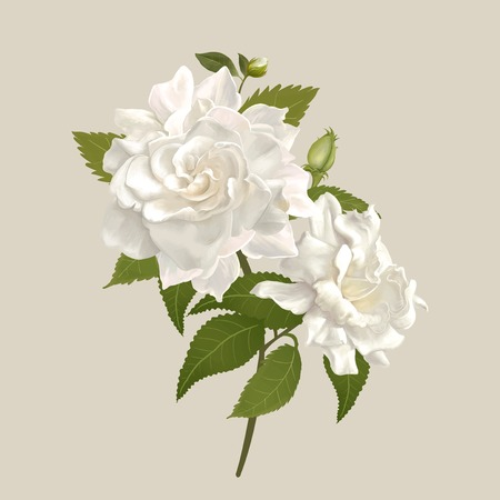 Beautiful gardenia flowering plant illustration