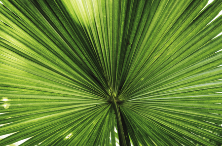Close up of a large green leaf