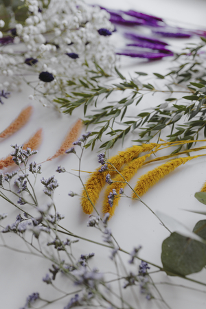 Various dried flowers on white background