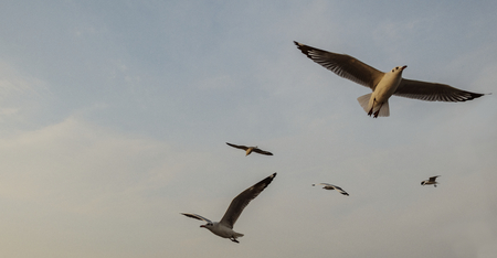 Flock of seagulls flying in the sky Stock Photo