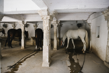 The royal stable inside the City Palace, Udaipur, India Stock Photo