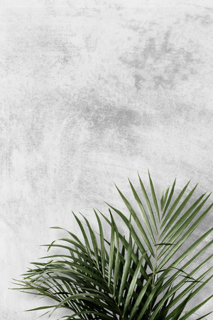 Areca palm on gray background