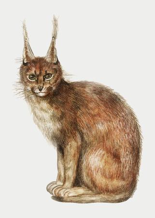 Vintage lynx illustration in vector Foto de archivo - 125239430