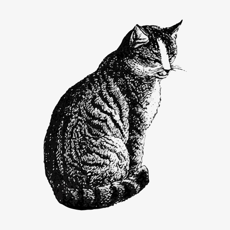 Domestic cat illustration vector  イラスト・ベクター素材