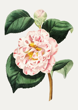 Vintage gray's invincible camellia flower branch for decoration