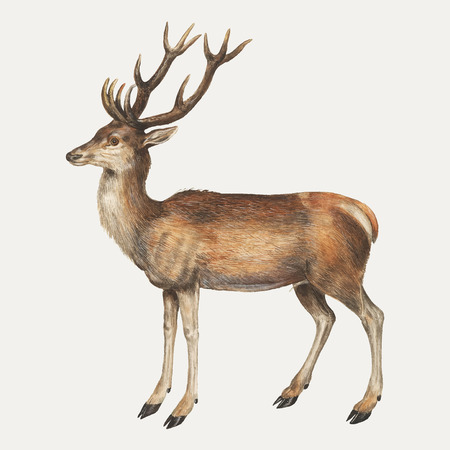 Vintage deer illustration in vector