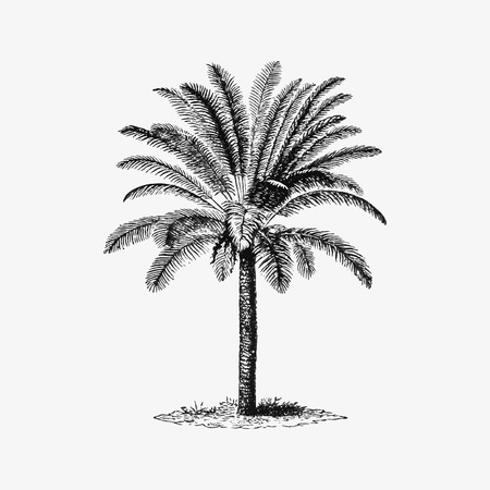Tropical palm tree illustration vector