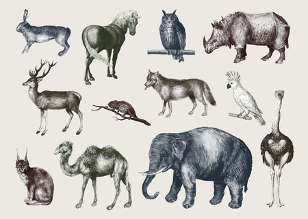 Vintage safari animals set vector