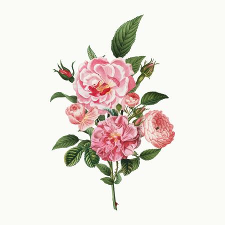 Vintage pink rose bouquet vector