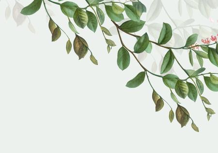 Vintage botanical frame design vector Stock Illustratie