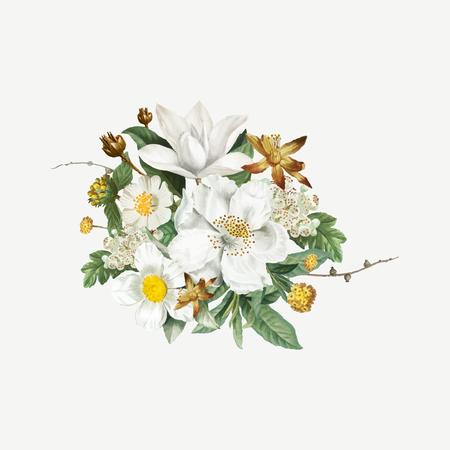 Vecteur de camélia de montagne vintage en fleurs