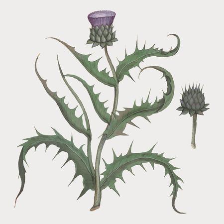Vintage artichoke flower illustration in vector