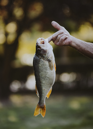 Fish hooked on a finger