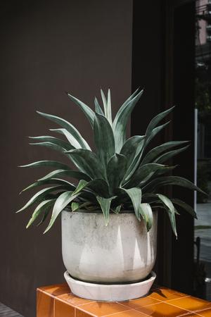 White plant pot display outdoors Stok Fotoğraf