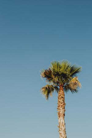Palm tree under the bright blue sky Stock Photo