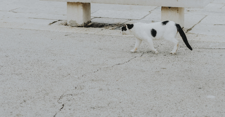 Cat strolling around the sea port