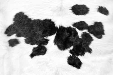 Biała skóra bydlęca z czarnymi plamami w tle