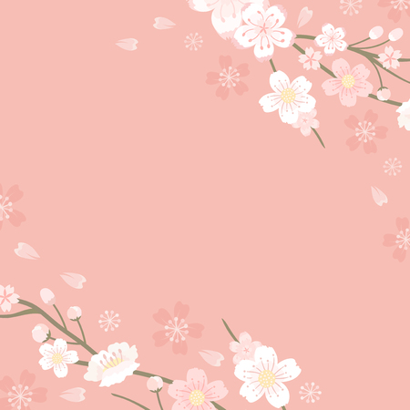 Pink cherry blossom blank background vectot